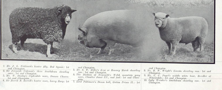Illustrated Sporting and Dramatic News - Saturday 11 July 1914 part 4