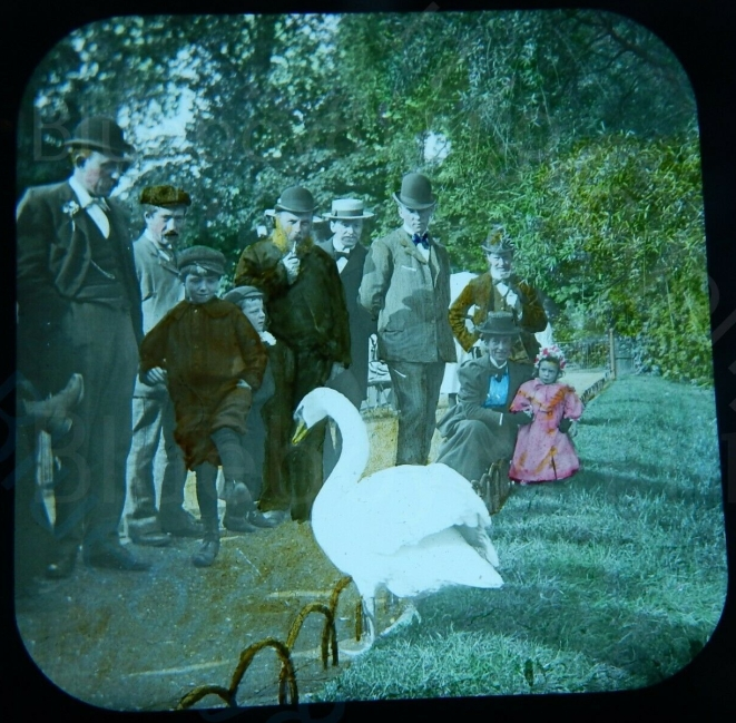 British-park-Swan-magic-lantern