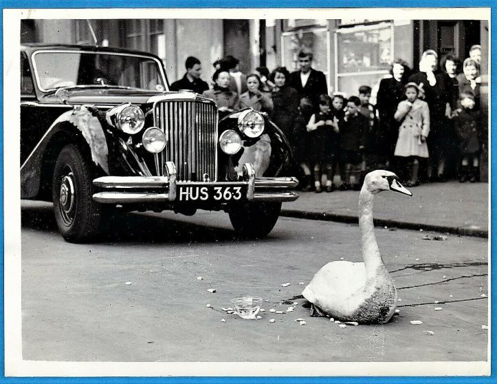 vintage-photo-swan-Jaguar-Mk-V